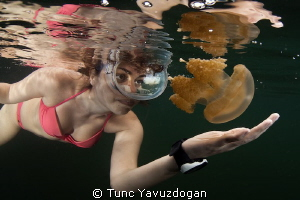 Snorkeling around the Famous Jellyfish Lake in Palau . by Tunc Yavuzdogan 